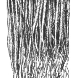 Branch II